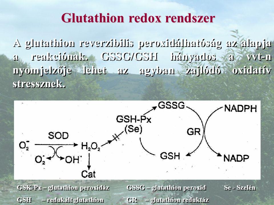Glutathion redox rendszer A glutathion reverzibilis peroxidálhatóság az alapja a reakciónak.