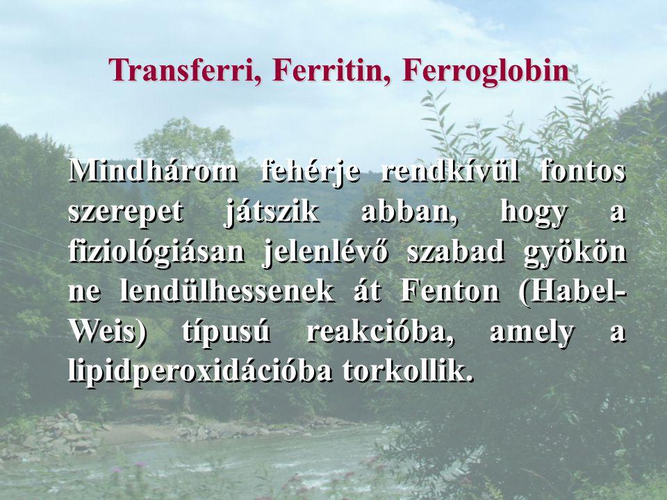 Transferri, Ferritin, Ferroglobin Mindhárom fehérje rendkívül fontos szerepet játszik abban, hogy a fiziológiásan jelenlévő szabad gyökön ne lendülhessenek át Fenton (Habel- Weis) típusú reakcióba, amely a lipidperoxidációba torkollik.