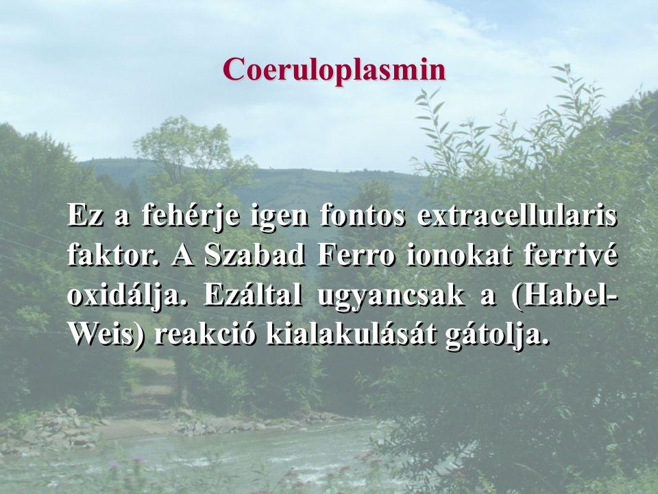 Coeruloplasmin Ez a fehérje igen fontos extracellularis faktor.