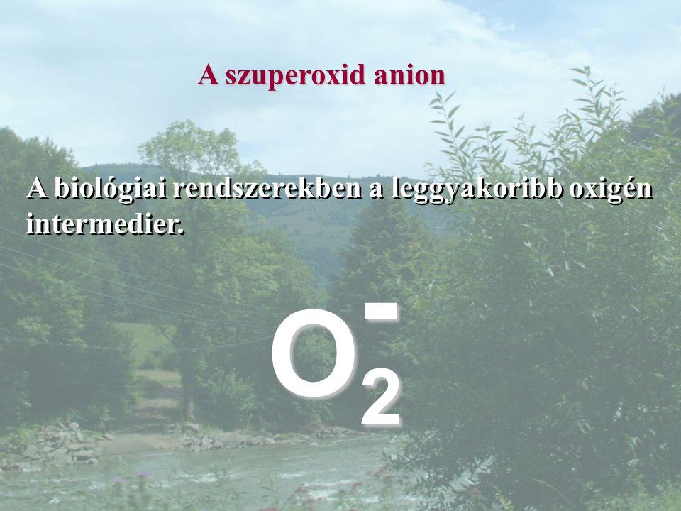 A szuperoxid anion A biológiai rendszerekben a leggyakoribb oxigén intermedier. O2O2O2O2 -