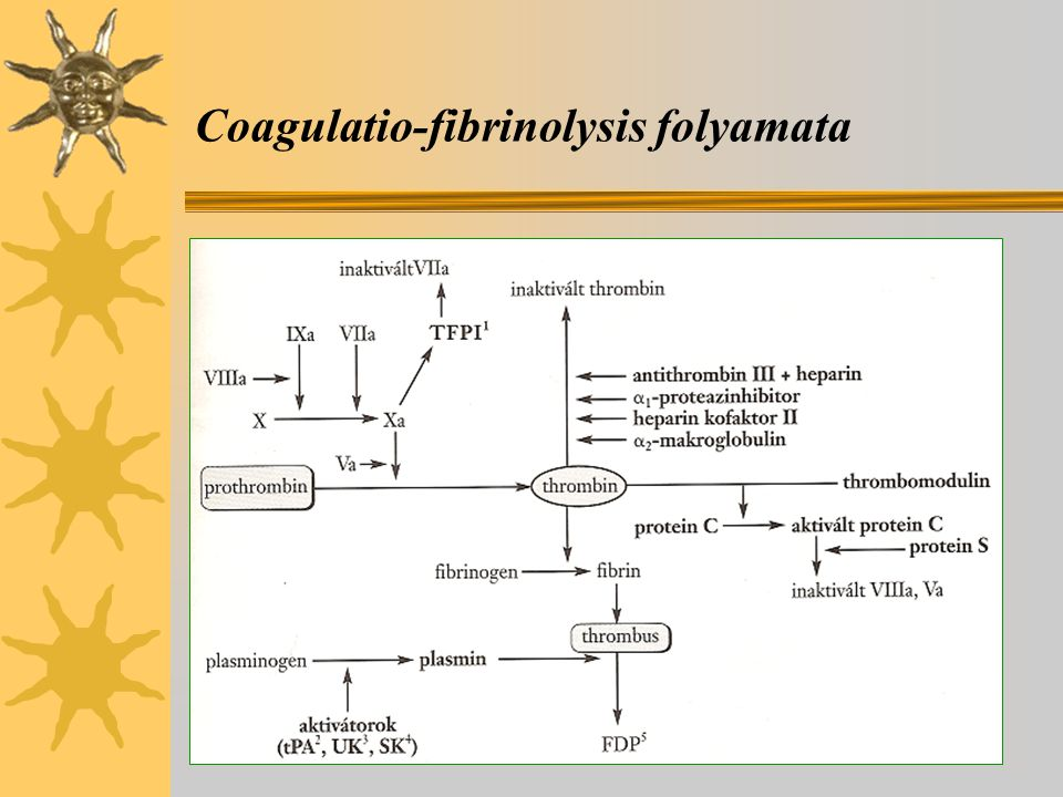 Coagulatio-fibrinolysis folyamata