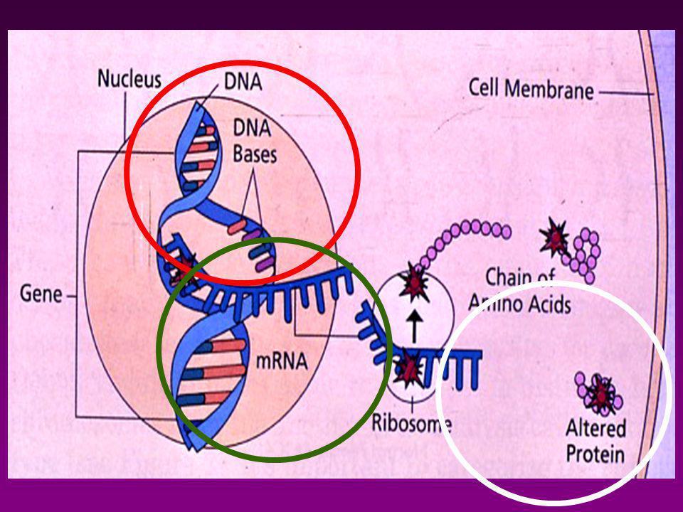 DNSmRNS protein HPV DNS jelenléte (L vs E gének) HPV DNS tipizálása csoportonként ( HR/LR) HPV DNS tipizálása virus-tipusonként mRNS és tipizálása (E6,E7) p16ink4 tok fehérje immunhisztokémia