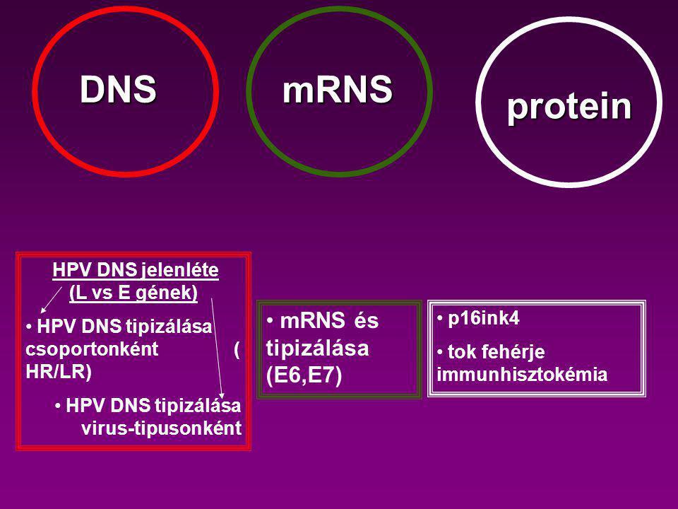 DNSmRNS protein HPV DNS jelenléte (L vs E gének) HPV DNS tipizálása csoportonként ( HR/LR) HPV DNS tipizálása virus-tipusonként mRNS és tipizálása (E6