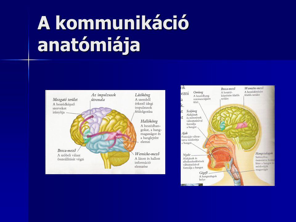 A kommunikáció anatómiája