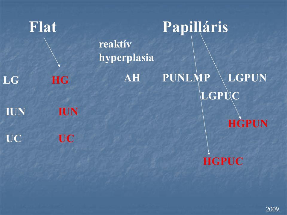 FlatPapilláris LGHG IUN UC reaktív hyperplasia AHPUNLMPLGPUN LGPUC HGPUN HGPUC IUN UC 2009.