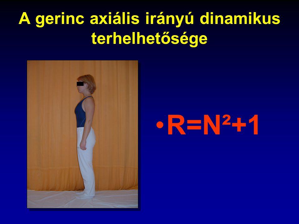 A gerinc axiális irányú dinamikus terhelhetősége R=N²+1