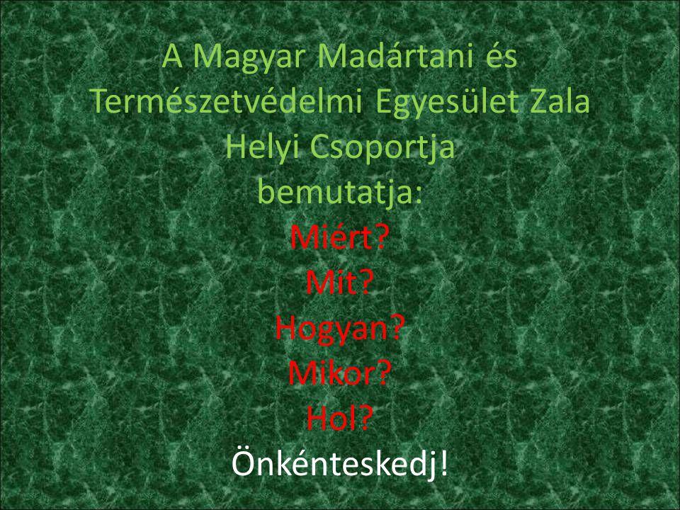 A Magyar Madártani és Természetvédelmi Egyesület Zala Helyi Csoportja bemutatja: Miért? Mit? Hogyan? Mikor? Hol? Önkénteskedj!