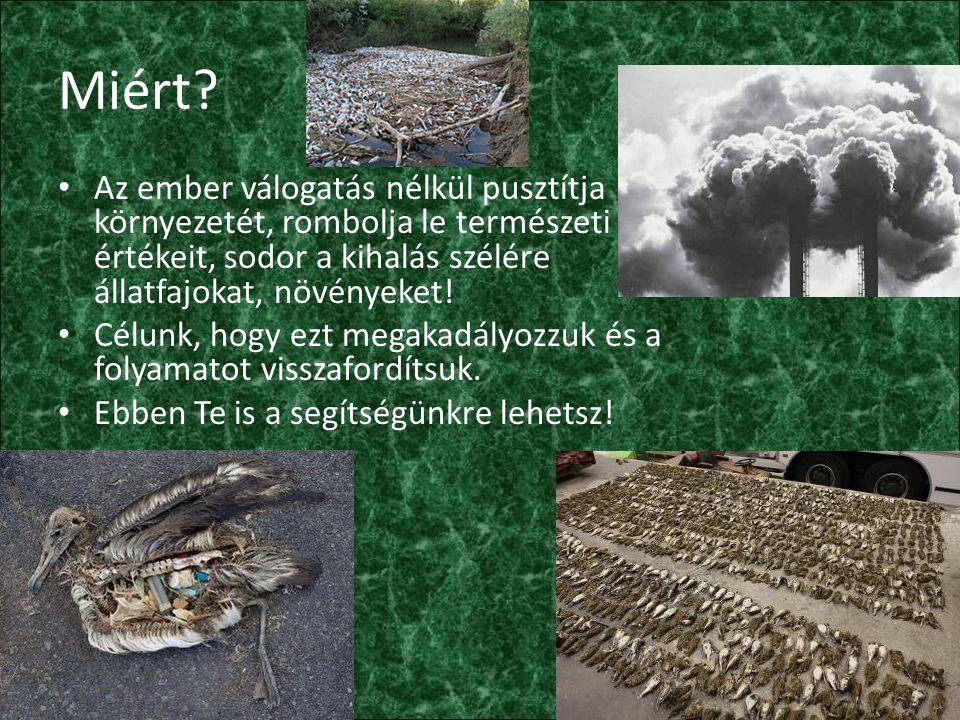 Miért? Az ember válogatás nélkül pusztítja környezetét, rombolja le természeti értékeit, sodor a kihalás szélére állatfajokat, növényeket! Célunk, hog