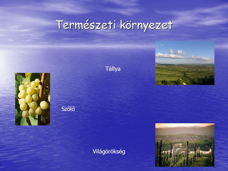 Természeti környezet Tállya Szőlő Világörökség