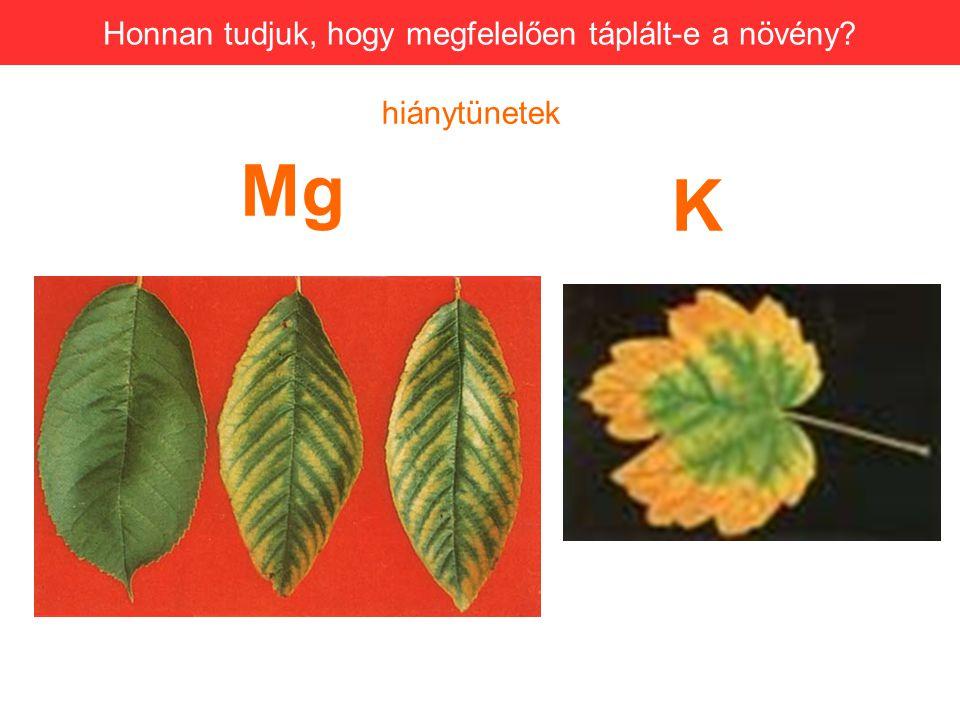 Mg Honnan tudjuk, hogy megfelelően táplált-e a növény? K hiánytünetek