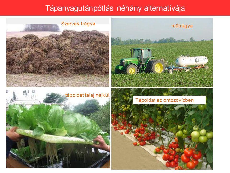 Tápanyagutánpótlás néhány alternatívája Szerves trágya műtrágya tápoldat talaj nélkül Tápoldat az öntözővízben