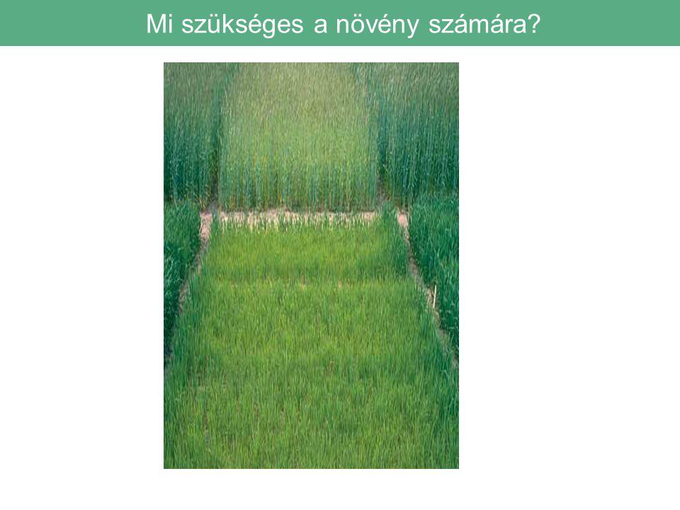 Mi szükséges a növény számára?