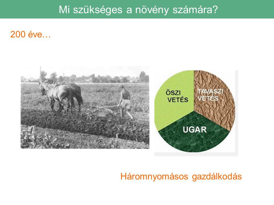 200 éve… Háromnyomásos gazdálkodás Mi szükséges a növény számára?
