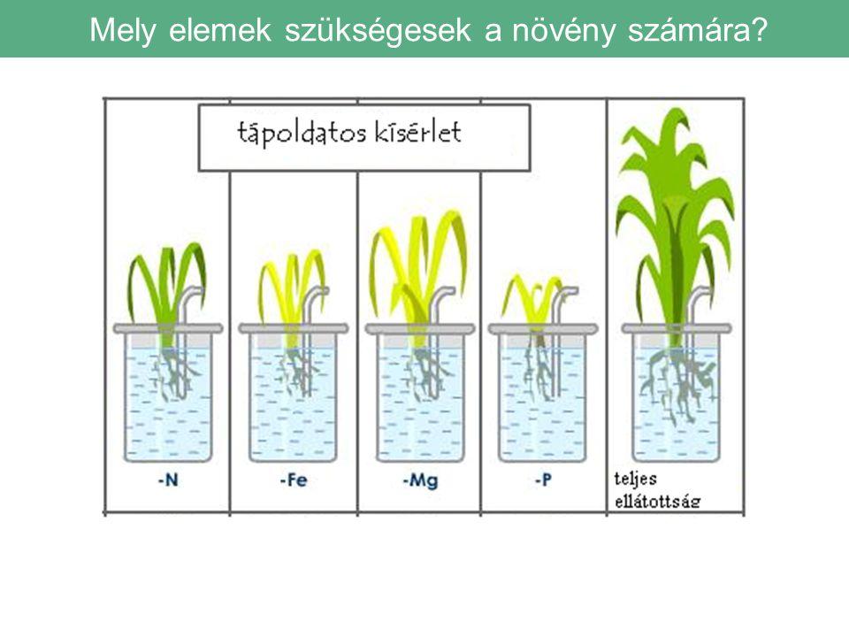 Mely elemek szükségesek a növény számára?