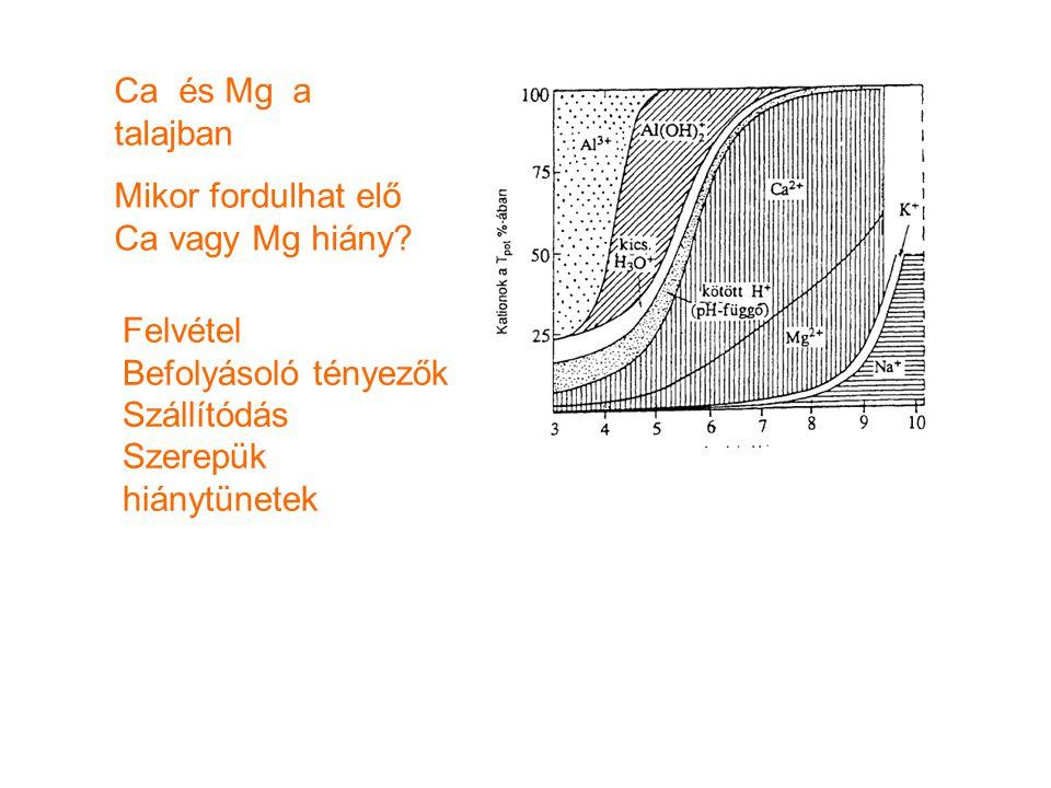 Ca és Mg a talajban Mikor fordulhat elő Ca vagy Mg hiány? Felvétel Befolyásoló tényezők Szállítódás Szerepük hiánytünetek