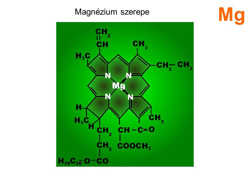 Magnézium szerepe Mg