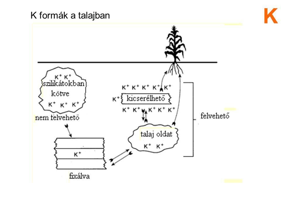 K formák a talajban K