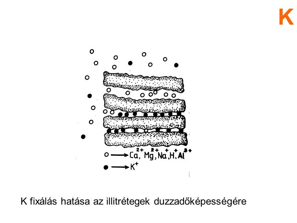 Sejt vízfelvételét szabályozza membrán átjárhatóságot befolyásol Ca Ca szerepe