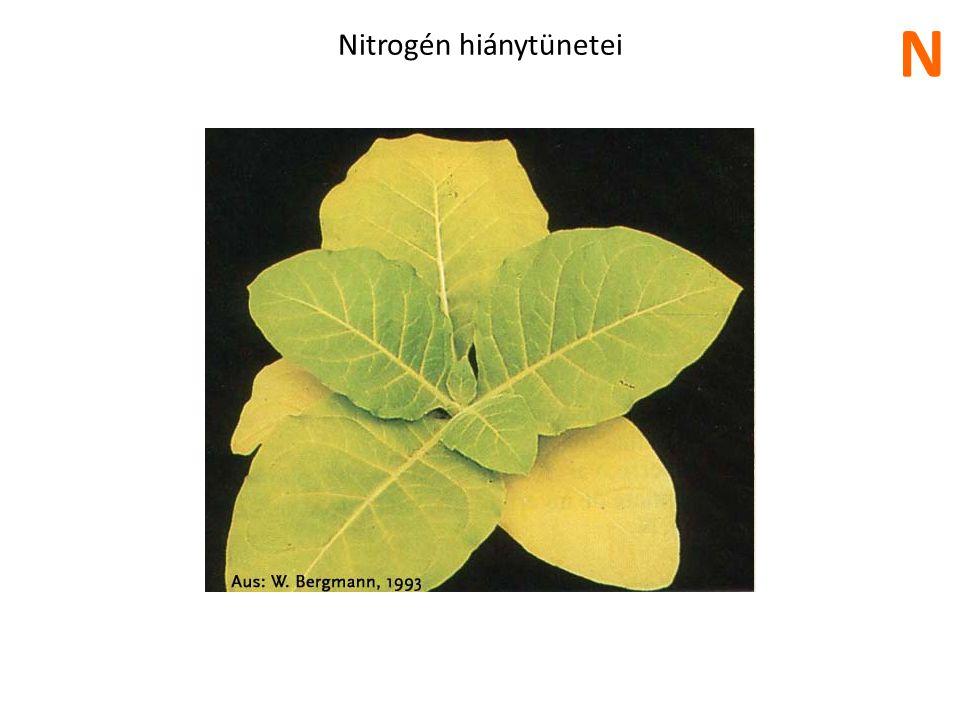 Nitrogén felesleg hatása N