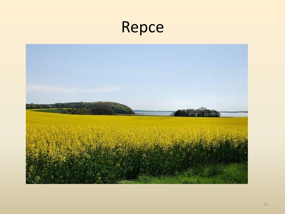 Repce 11