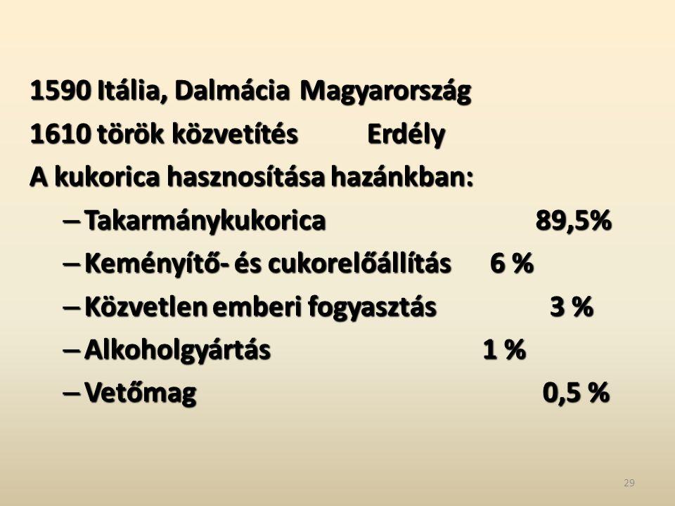 1590 Itália, DalmáciaMagyarország 1610 török közvetítésErdély A kukorica hasznosítása hazánkban: – Takarmánykukorica 89,5% – Keményítő- és cukorelőáll