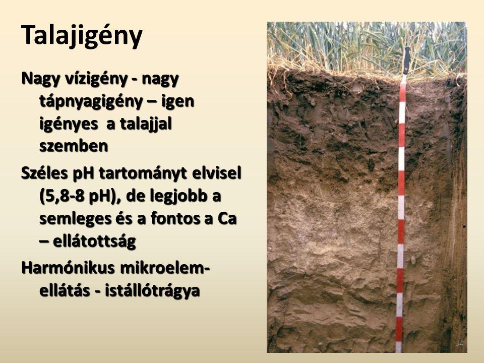 Talajigény Nagy vízigény - nagy tápnyagigény – igen igényes a talajjal szemben Széles pH tartományt elvisel (5,8-8 pH), de legjobb a semleges és a fon