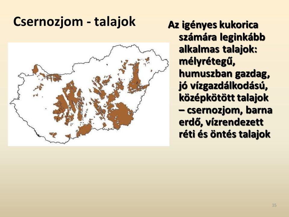 Csernozjom - talajok Az igényes kukorica számára leginkább alkalmas talajok: mélyrétegű, humuszban gazdag, jó vízgazdálkodású, középkötött talajok – c
