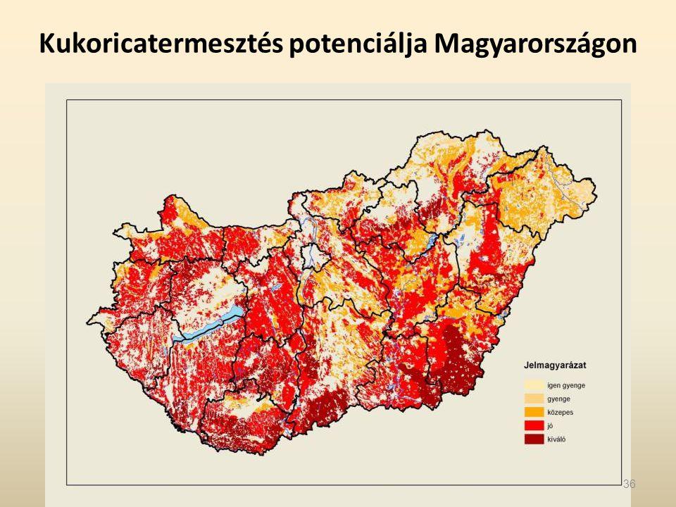 Kukoricatermesztés potenciálja Magyarországon 36