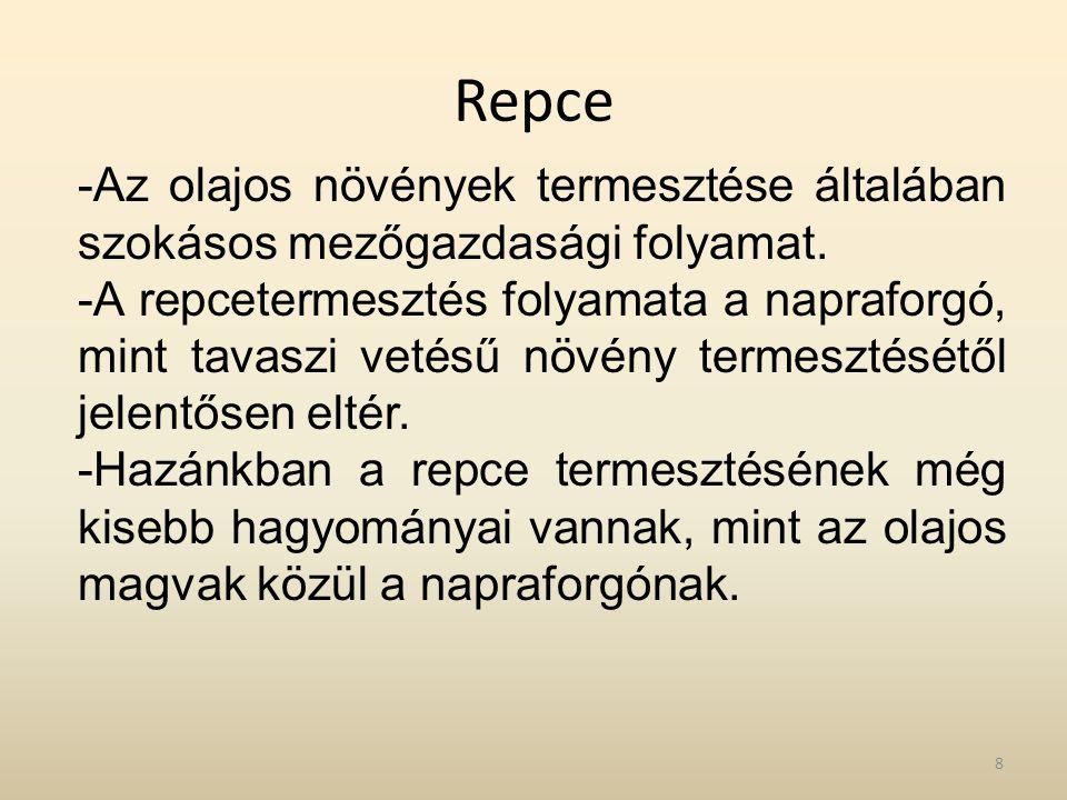Repce -Az olajos növények termesztése általában szokásos mezőgazdasági folyamat. -A repcetermesztés folyamata a napraforgó, mint tavaszi vetésű növény