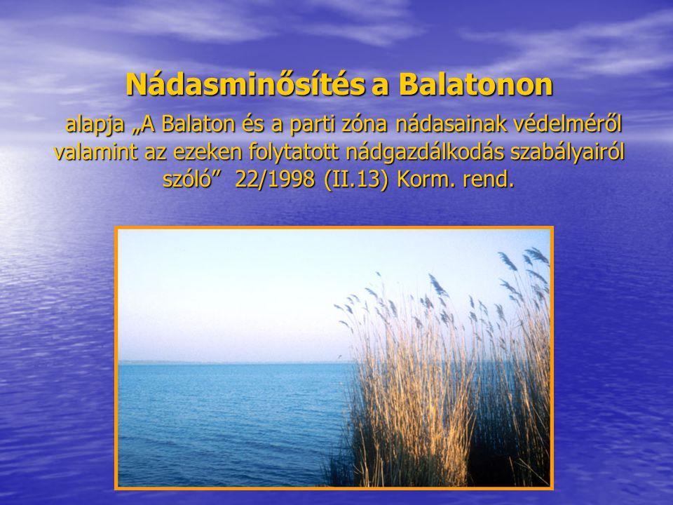 """Nádasminősítés a Balatonon alapja """"A Balaton és a parti zóna nádasainak védelméről valamint az ezeken folytatott nádgazdálkodás szabályairól szóló 22/1998 (II.13) Korm."""