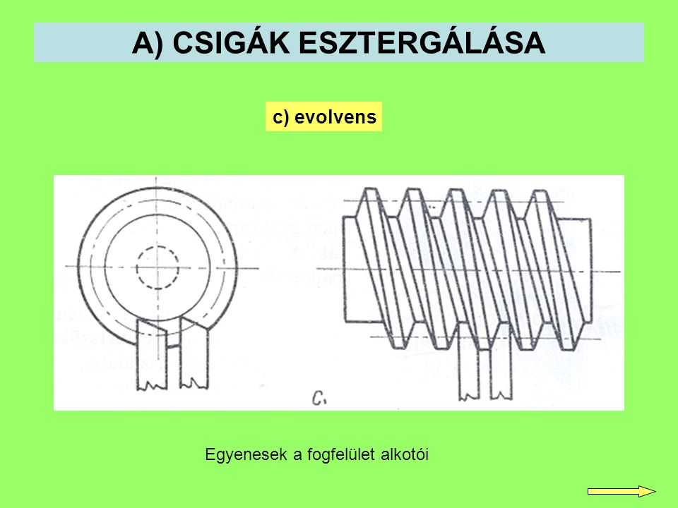 A) CSIGÁK ESZTERGÁLÁSA c) evolvens Egyenesek a fogfelület alkotói