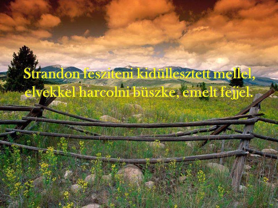 Strandon fesziteni kidüllesztett mellel, elvekkel harcolni büszke, emelt fejjel.