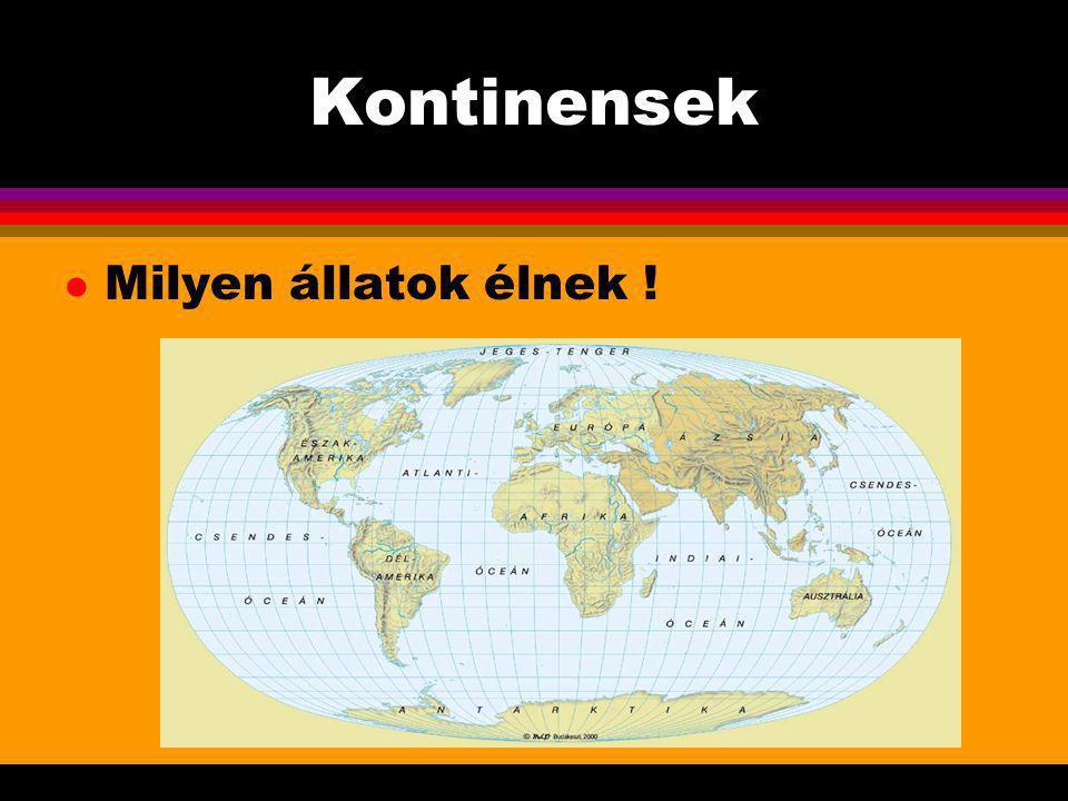 . KONTINENSEK - AUSZTRÁLIA