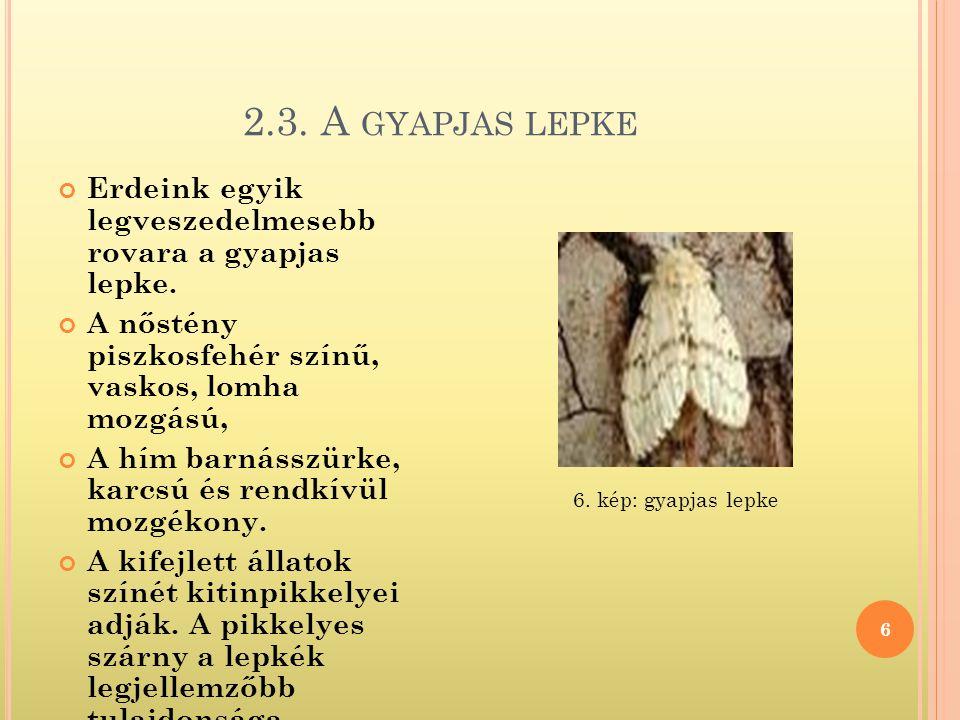 2.3. A GYAPJAS LEPKE 6 Erdeink egyik legveszedelmesebb rovara a gyapjas lepke. A nőstény piszkosfehér színű, vaskos, lomha mozgású, A hím barnásszürke