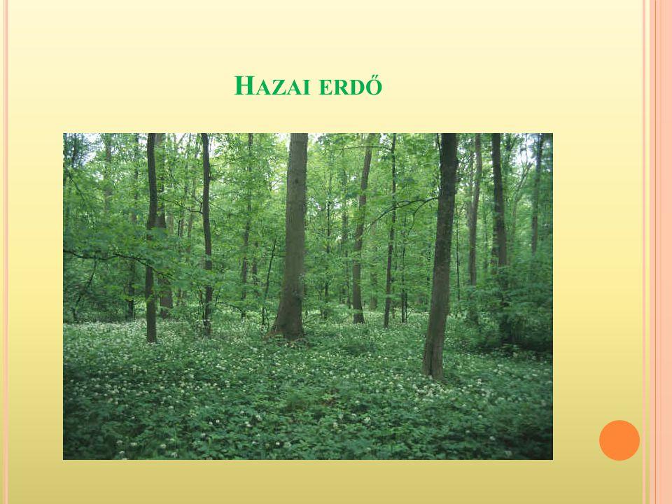 """H AZAI ERDŐINK Az """"ezerarcú erdő"""