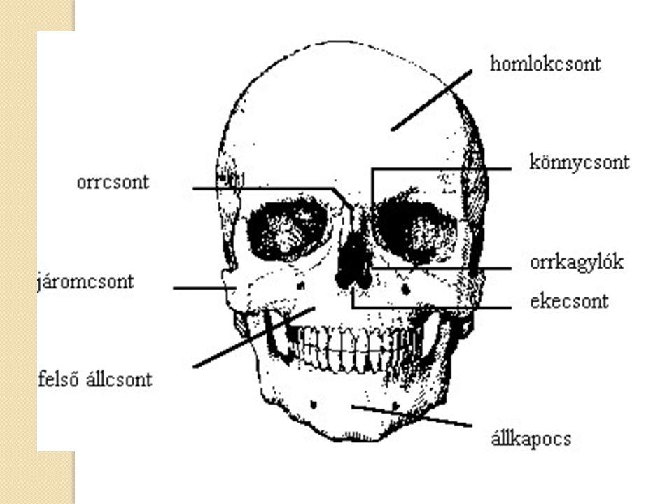Csontszövet