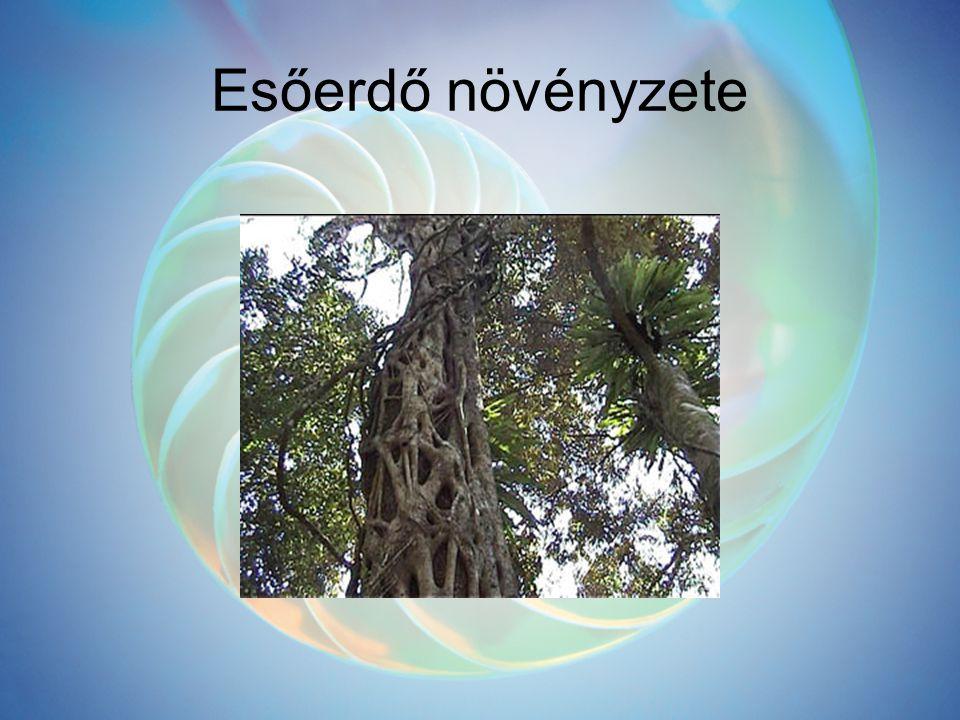 Esőerdő növényzete