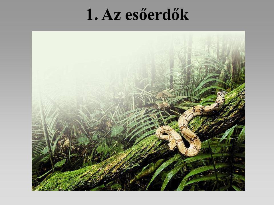 1. Az esőerdők