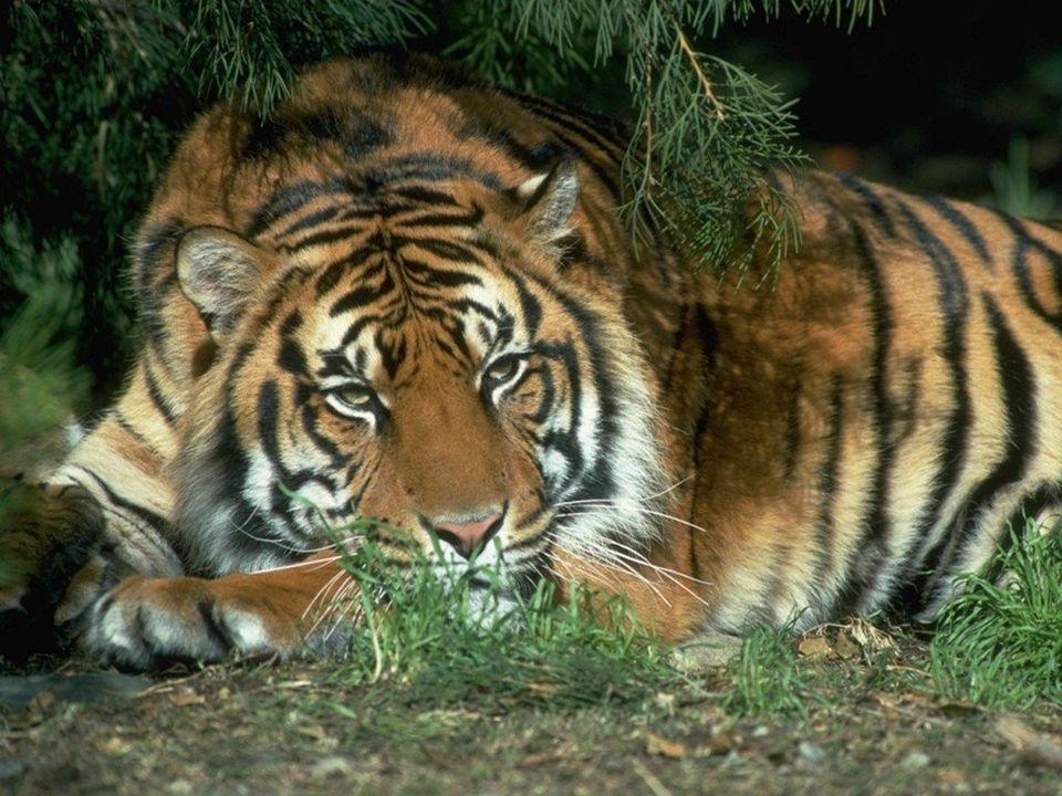 Azután monda Isten: Hozzon a föld élő állatokat nemök szerint: barmokat, csúszó mászó állatokat...