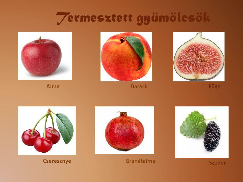 Alma Cseresznye BarackFüge Szeder Gránátalma Termesztett gyümölcsök
