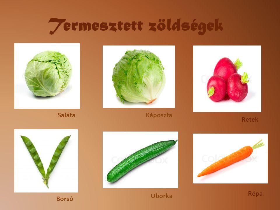 Termesztett zöldségek SalátaKáposzta Retek Borsó Uborka Répa