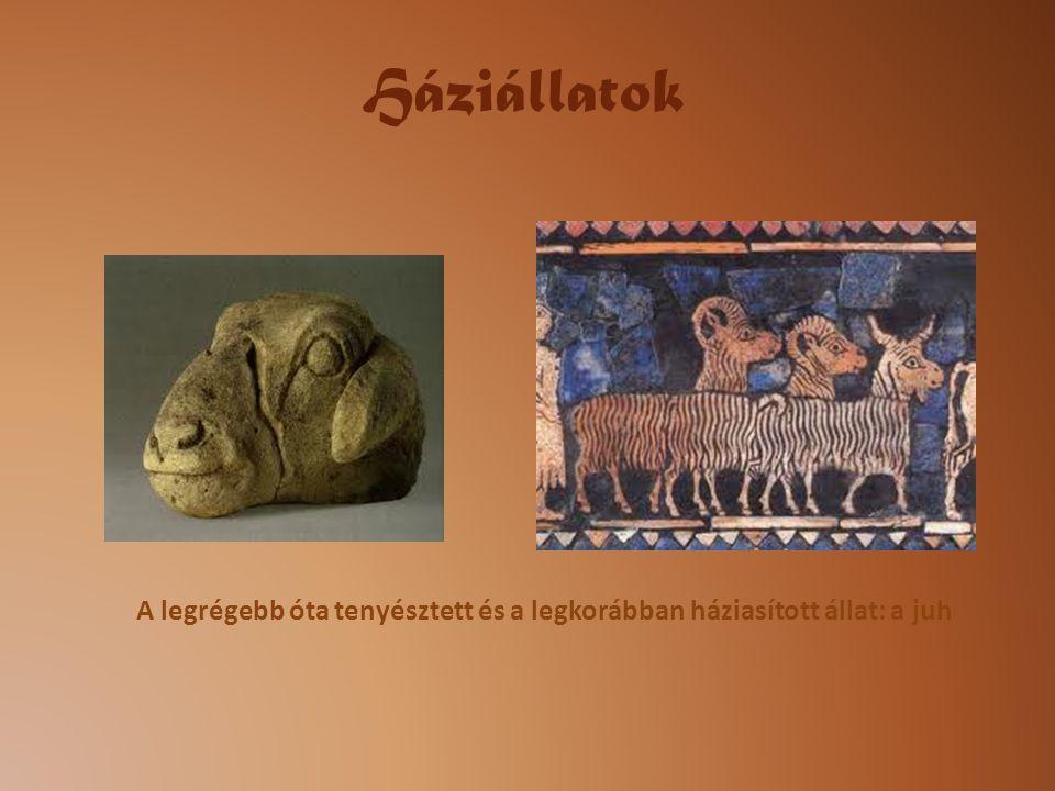 Háziállatok A legrégebb óta tenyésztett és a legkorábban háziasított állat: a juh