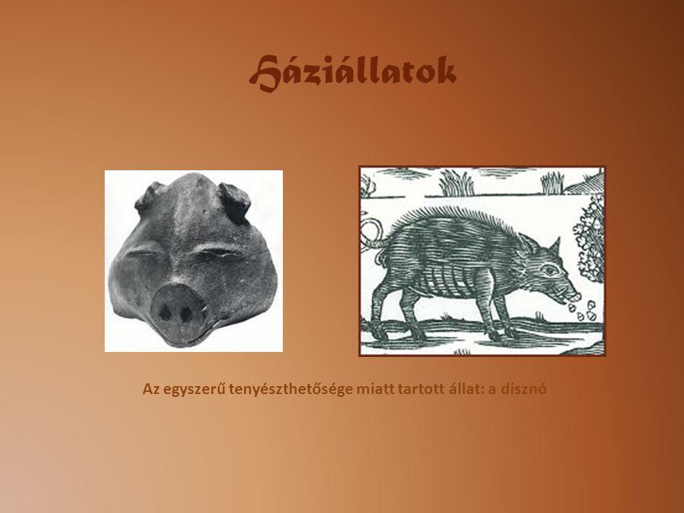 Háziállatok Az egyszerű tenyészthetősége miatt tartott állat: a disznó