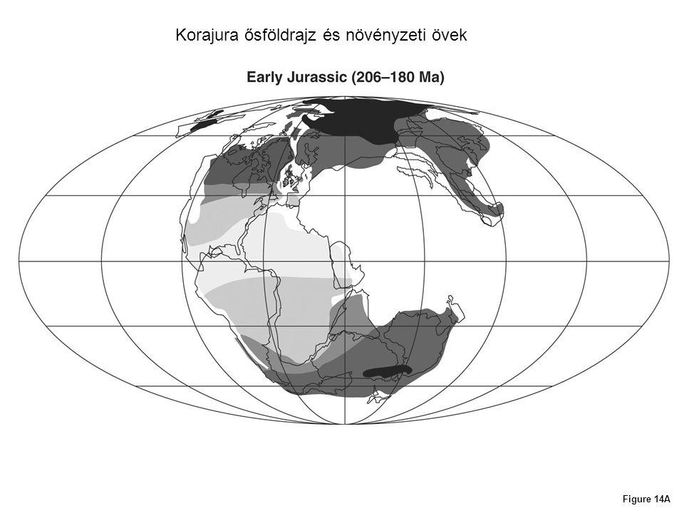 Figure 14A Korajura ősföldrajz és növényzeti övek