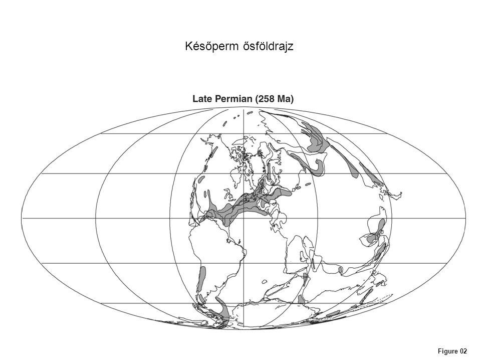Figure 11 Tűlevelű fák triász radiációja
