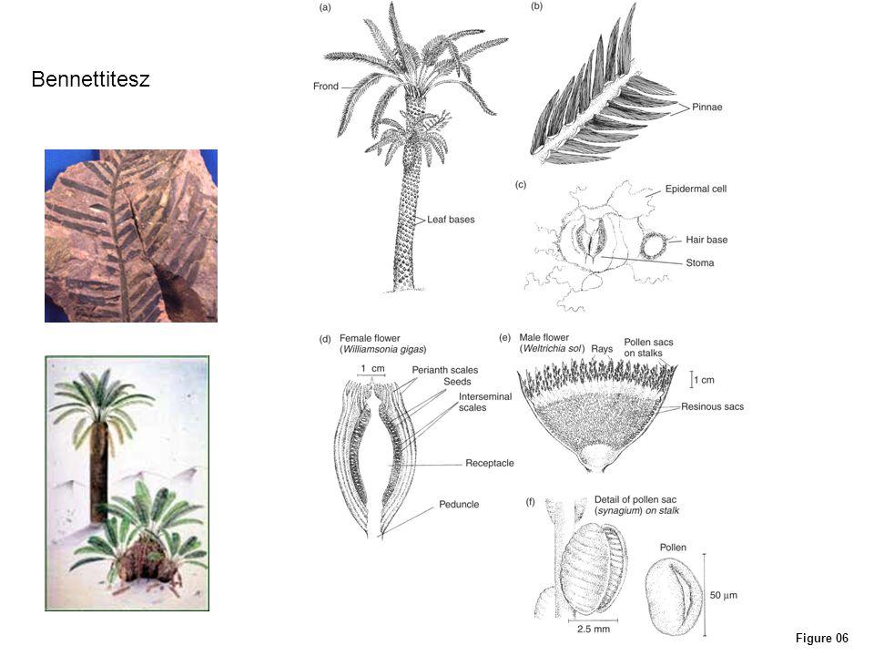 Figure 14B Korajura növényzeti övek