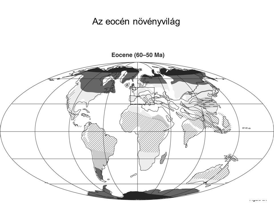 Figure 6A Az eocén növényvilág