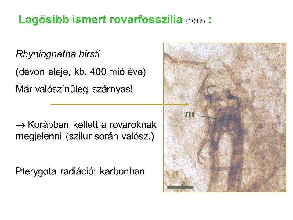 Rhyniognatha hirsti (devon eleje, kb. 400 mió éve) Már valószínűleg szárnyas!  Korábban kellett a rovaroknak megjelenni (szilur során valósz.) Pteryg