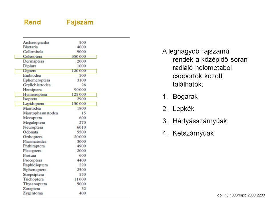 Rend Fajszám A legnagyob fajszámú rendek a középidő során radiáló holometabol csoportok között találhatók: 1.Bogarak 2.Lepkék 3.Hártyásszárnyúak 4.Két