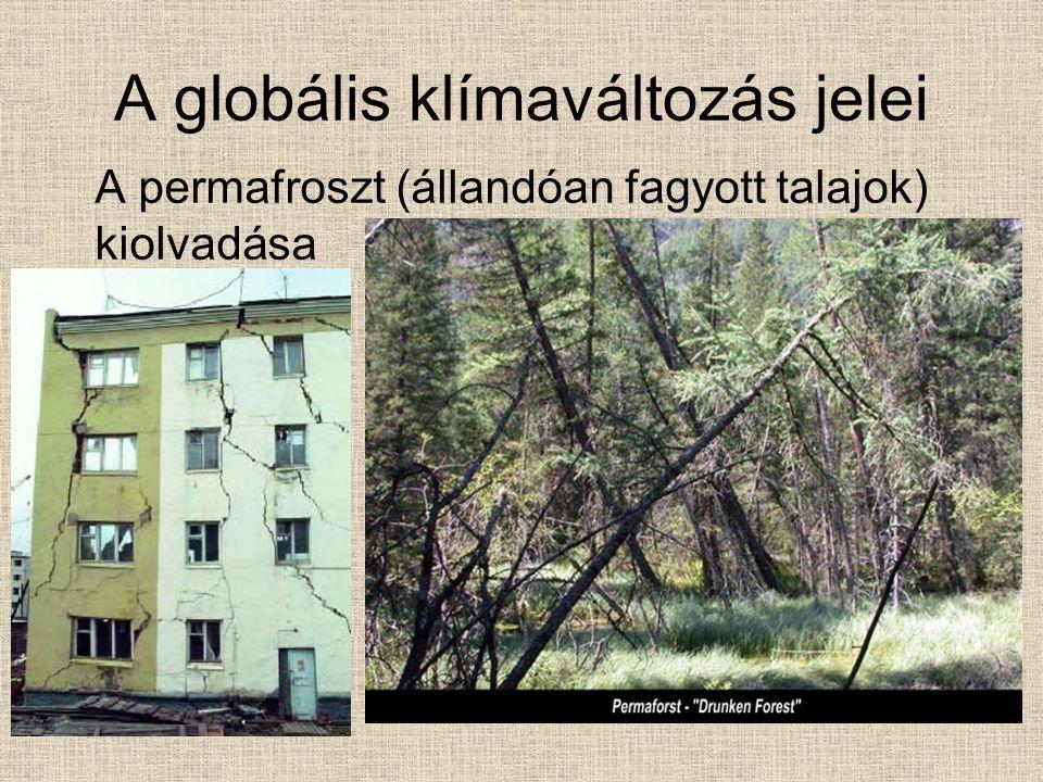 A globális klímaváltozás jelei A permafroszt (állandóan fagyott talajok) kiolvadása